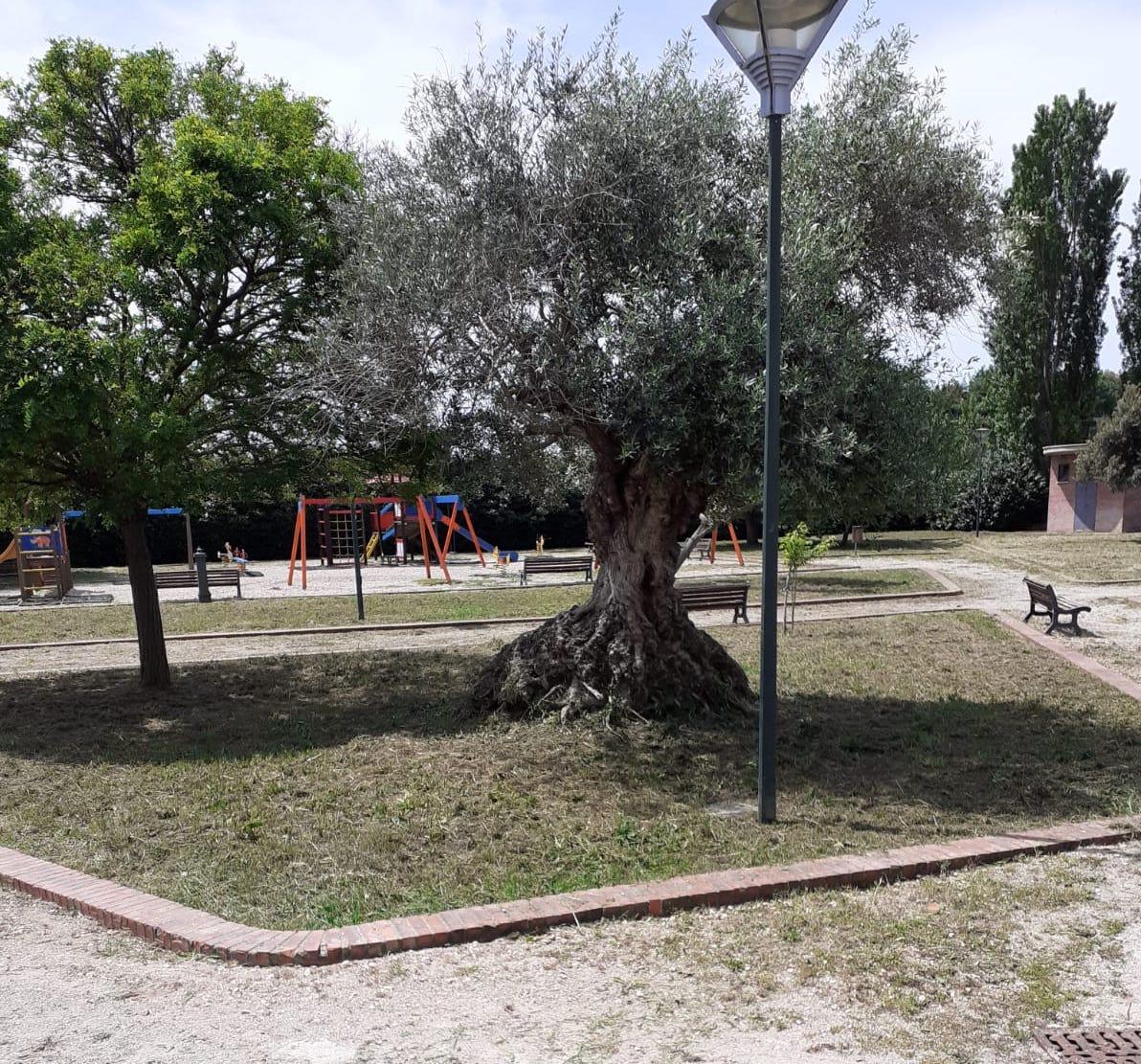 Latina Scalo: erba tagliata al Faustinella